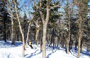 best-ski-glades