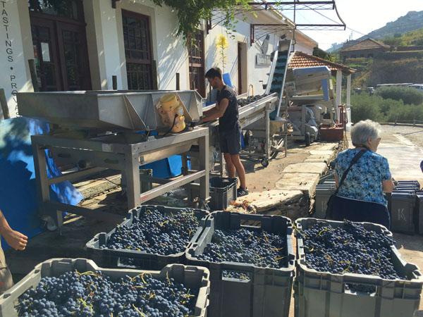 quinta-do-tedo-winery